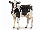 Товары для КРС (Крупного рогатого скота)