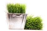 Семена зелени для животных