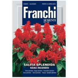 Сальвия блестящая низкая Nana Incendio DBF (0,5 гр) 348/1 Franchi Sementi