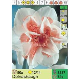 Нарциссы Delnashaugh (x75) 12/14 (цена за шт.)
