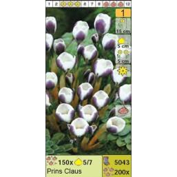 Крокус ботанический Prins Claus (x200) 5/7 (цена за шт.)