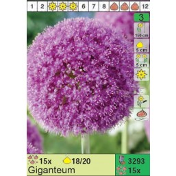 Лук Giganteum (x15) 18/20 (цена за шт.)