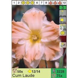 Нарциссы Cum Laude (x75) 12/14 (цена за шт.)