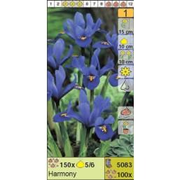 Ирисы ретикулята Harmony (x100) 5/6 (цена за шт.)