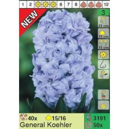 Гиацинты General Koehler (x50) 15/16 (цена за шт.)