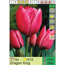 Тюльпаны Dragon King (x100) 11/12 (цена за шт.)