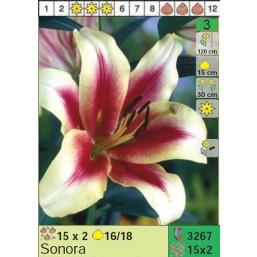 Лилии Sonora (x30) 16/18 (цена за шт.)