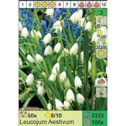 Белоцветник Aestivum (x100) 8/10 (цена за шт.)
