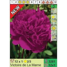 Пионы Vic. de La Marne (x12) 2/3 (цена за шт.)