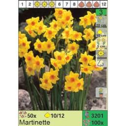 Нарциссы Martinette (x100) 10/12 (цена за шт.)