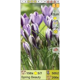 Крокус ботанический Tricolor 5/+
