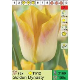 Тюльпаны Golden Dynasty (x100) 11/12 (цена за шт.)