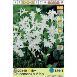 Хионодокса Alba (x150) 5/7 (цена за шт.)