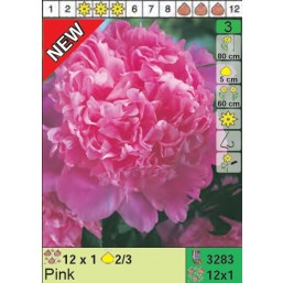Пионы Pink (x12) 2/3 (цена за шт.)