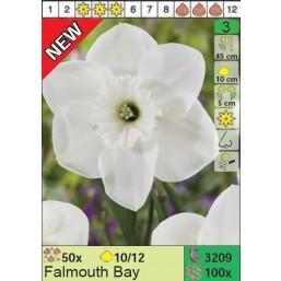 Нарциссы Falmouth Bay (x100) 10/12 (цена за шт.)