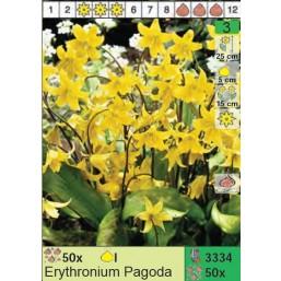 Кандык Pagoda (x50) I (цена за шт.)