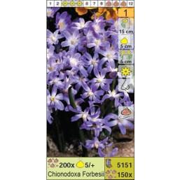 Хионодокса Forbesii (x150) 5/7 (цена за шт.)