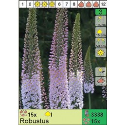 Эремурус Robustus (x15) I (цена за шт.)