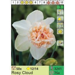 Нарциссы Rosy Cloud (x75) 12/14 (цена за шт.)