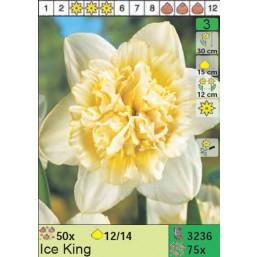 Нарциссы Ice King (x75) 12/14 (цена за шт.)