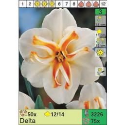 Нарциссы Delta (x75) 12/14 (цена за шт.)
