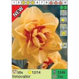 Нарциссы Innovator (x75) 12/14 (цена за шт.)