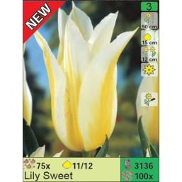 Тюльпаны Lily Sweet (x100) 11/12 (цена за шт.)