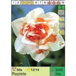 Нарциссы Replete (x75) 12/14 (цена за шт.)