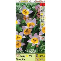 Тюльпаны ботанические Saxatillis (x150) 7/8 (цена за шт.)