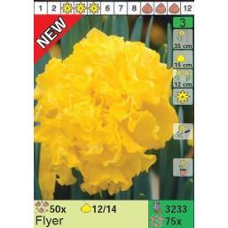 Нарциссы Flyer (x75) 12/14 (цена за шт.)