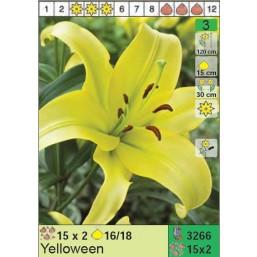 Лилии Yelloween (x30) 16/18 (цена за шт.)