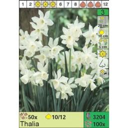 Нарциссы Thalia (x100) 10/12 (цена за шт.)