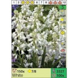 Гиацинтоидос White (x100) 7/8 (цена за шт.)
