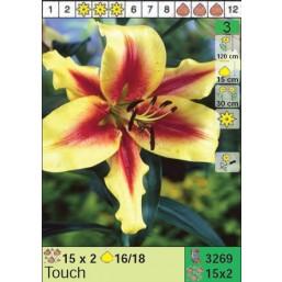Лилии Touch (x30) 16/18 (цена за шт.)