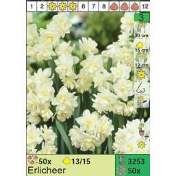 Нарциссы Erlicheer (x50) 13/14 (цена за шт.)