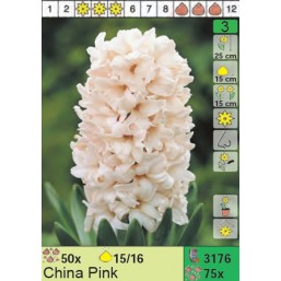 Гиацинты China Pink (x75) 15/16 (цена за шт.)