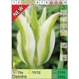 Тюльпаны Deidre (x100) 11/12 (цена за шт.)