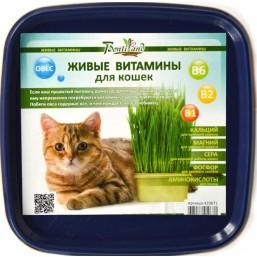 """Овёс """"Для кошек"""" живые витамины BONTILAND (пластик. коробочка, универсальный грунт, семена)"""