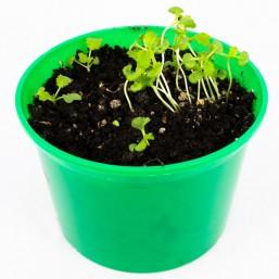 """Горчица листовая """"Зелень круглый год"""" набор для выращивания BONTILAND (горшочек с крышкой, питательный субстрат, дренаж, семена)"""