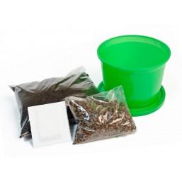 """Черемша """"Зелень круглый год"""" набор для выращивания BONTILAND (горшочек с крышкой, питательный субстрат, дренаж, семена)"""