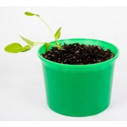 """Стевия """"Зелень круглый год"""" набор для выращивания BONTILAND (горшочек с крышкой, питательный субстрат, дренаж, семена)"""