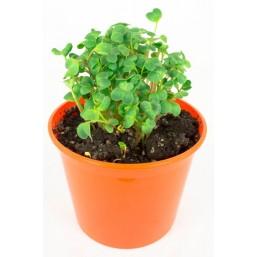 """Редис """"Азбука растений"""" набор для выращивания BONTILAND (горшочек, питательный субстрат, семена, пластиковая лопатка для рыхления)"""
