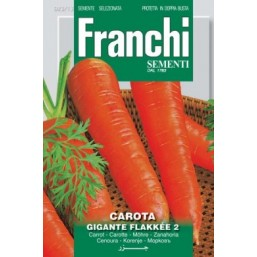 Морковь Flakkee 2 (0,2 гр)  23/13 Franchi Sementi