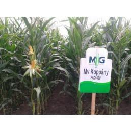 Семена кукурузы гибрид F1 MV Коппань