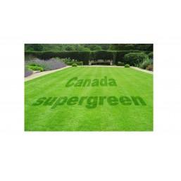 Семена газонных трав Канада Супер Грин 1 кг
