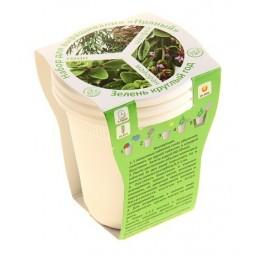 Пряный №2 (шалфей, майоран, тмин) набор для выращивания BONTILAND (3 стаканчика, 3 кокосовые таблетки, семена)