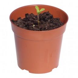 Горшок для цветов 0,3 л., глубина - 10 см., диаметр - 10,5 см. 4125 Worth