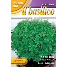 Базилик Fine Verde DBO 13/1   Franchi Sementi