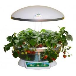 """Гидропонная установка """"Домашний сад"""" BONTILAND (предназначена для выращ. в дом. условиях зелени, цветов, низкор.сортов овощей)"""