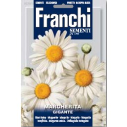 Нивяник Margherita Gigante (1 гр)   Franchi Sementi